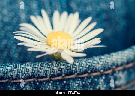 concept, daisy flower in a pocket of jean trousers - Stock Photo