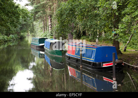 Three colourful long boats on Basingstoke Canal in Surrey, England - Stock Photo