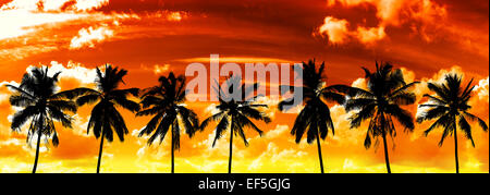 Black palms silhouettes on sunset sky. - Stock Photo