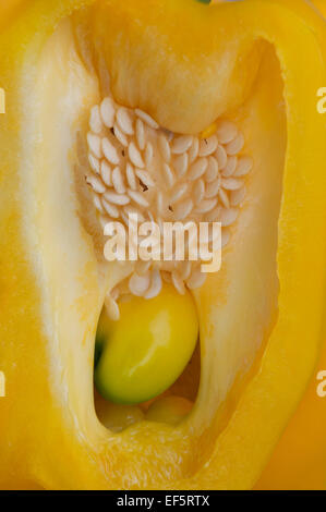 Yellow Pepper slice open showing seeds macro