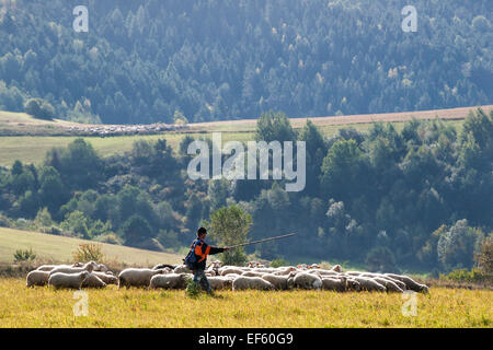 Shepherd and flock of sheep in country pastures, Dubrava village, Levoca region, Slovakia - Stock Photo