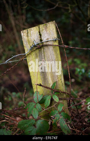 An old country fence post. - Stock Photo