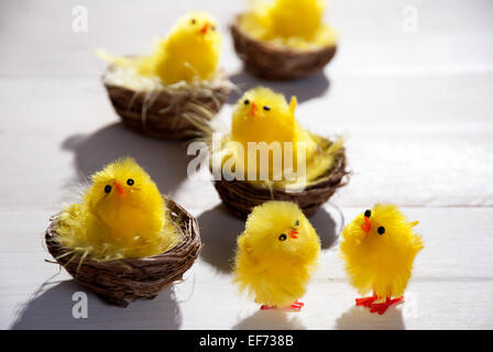 Four Easter Baskets Or Nests With Yellow Feathers And Many Easter Chicks In Sunny Light With Copy Space Free Text - Stock Photo