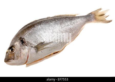Whole fresh Gilthead sea bream from a supermarket - Stock Photo