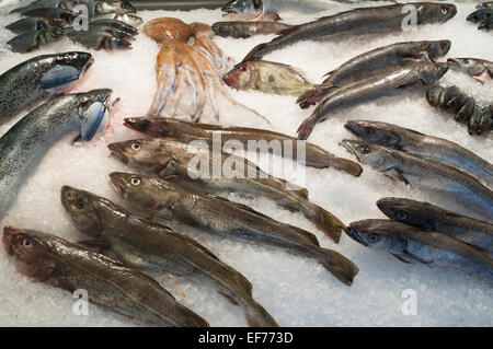 An ice covered British fishmongers slab with a variety of fish and squid for sale - Stock Photo