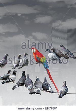 Multicolored parrot sitting on wire standing out from gray pigeons - Stock Photo
