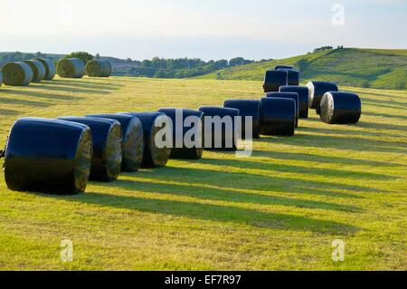 Silage bales rapped in black plastic in a field. Gilsland, Cumbria, England, UK. - Stock Photo