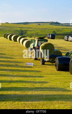 Silage bale being rapped in black plastic by a tractor in a field. Gilsland, Cumbria, England, UK. - Stock Photo