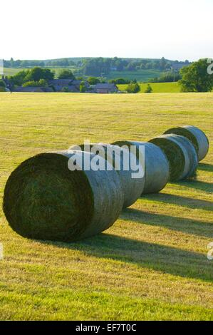 Silage bales in a field. Gilsland, Cumbria, England, UK. - Stock Photo