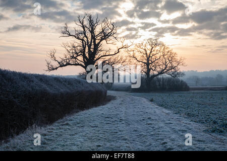 Two mature trees, their skeletal form, silhouetted against a cloudy dawn sky tinged pastel orange, in a frosted - Stock Photo