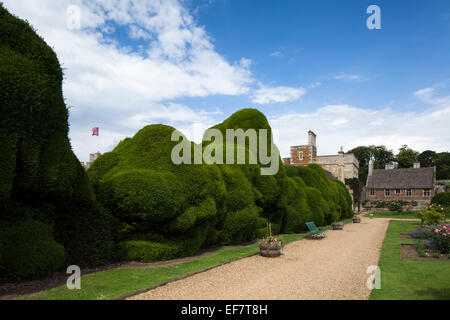 Famous double-yew hedge known as the 'Elephant' hedge in the gardens of Rockingham Castle near Corby, Northamptonshire, - Stock Photo