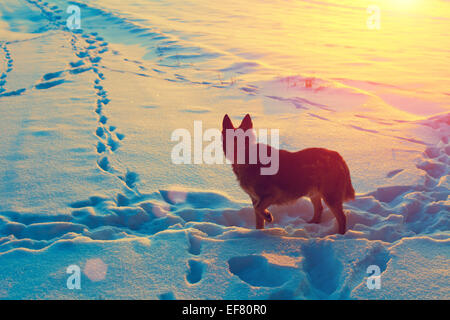 Dog on a snow-covered field - Stock Photo