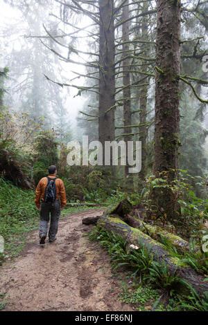 Man hiking on the Ossagon Trail - Prairie Creek Redwoods State Park, Humboldt County, North Coast, California, USA - Stock Photo