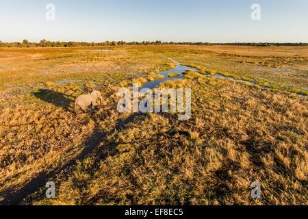 Africa, Botswana, Moremi Game Reserve, Aerial view of Elephant (Loxodonta africana) walking in wetlands in Okavango - Stock Photo