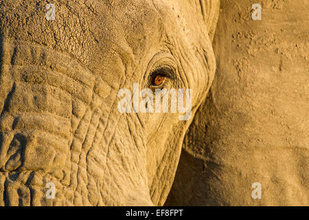 Africa, Botswana, Chobe National Park, Close-up view of eye of Elephant (Loxodonta africana) in Savuti Marsh at - Stock Photo