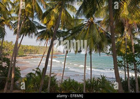 VIEW THROUGH PALMS TO GOYAMBOKKA BEACH - Stock Photo