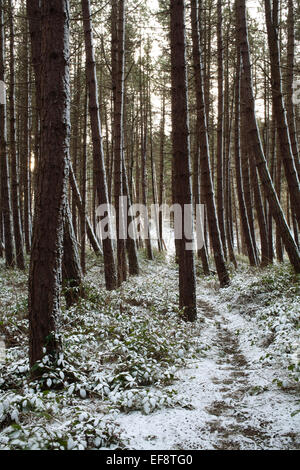 A pathway through a snowy pine forest. - Stock Photo