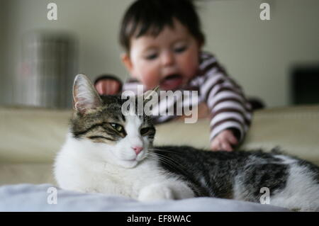 Baby (6-11 months) trying to catch cat tail - Stock Photo