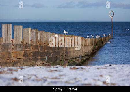 Edinburgh, UK. 29th January, 2015. UK Edinburgh Weather. Seagull lie on the wood wall. Temperature of 0 degree Bright - Stock Photo