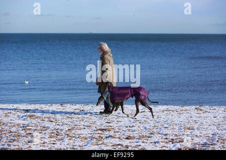 Edinburgh, UK. 29th January, 2015. UK Edinburgh Weather: A dog walker in Musselburgh enjoying of the weather. Temperature - Stock Photo