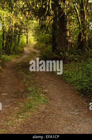 a dirt road going through an old growth forest - Stock Photo