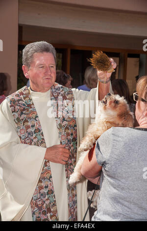 A priest blesses a dog at the Blessing of the Animals on the Feast of St. Francis of Assisi at St. Timothy's Catholic - Stock Photo