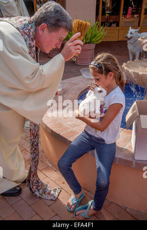 A  blesses a little girl's pet rabbit at the Blessing of the Animals on the Feast of St. Francis of Assisi at St. - Stock Photo