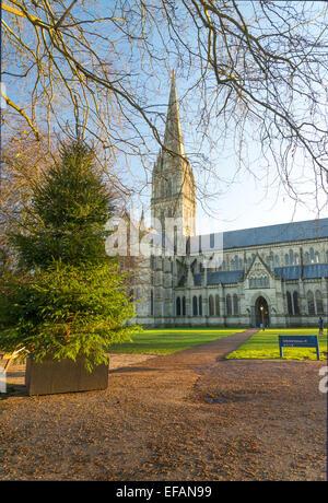 Display christmas tree at Salisbury, Wiltshire - Stock Photo