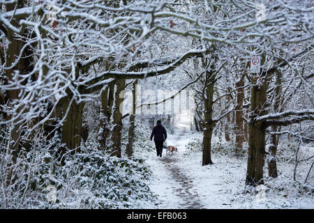 Snow covered Baddesley Ensor in North Warwickshire, UK. A woman walks her dog through the snow covered trees in - Stock Photo