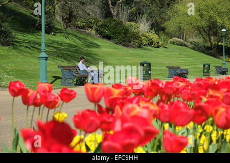 Sunshine and Spring Tulips - Stock Photo