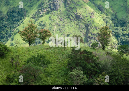 View of trees and Little Adam's Peak as seen from Adam's Peak.green scenery.Hill,mount,mountain.Ella Gap. - Stock Photo