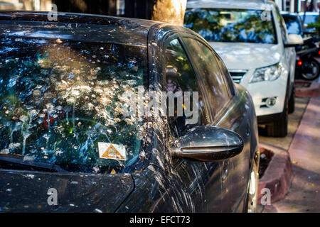 Miami Beach Florida car automobile vehicle bird droppings dirty guano excrement - Stock Photo