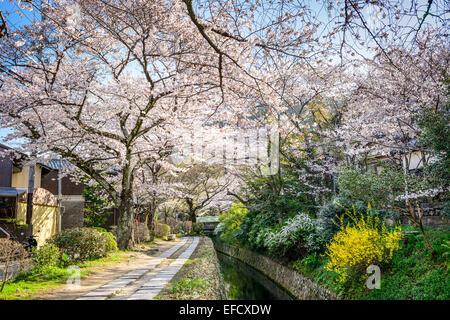 Kyoto, Japan at Philosopher's Walk in the spring season.