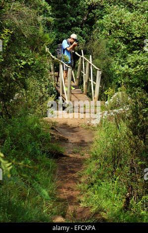 Single adult man doing nature walk, standing on wooden footbridge taking a photograph in Giants Castle game reserve, - Stock Photo