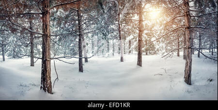 Winter snowy forest panorama with sun - Stock Photo