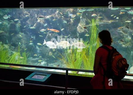 Aquarium in Loro Parque, Puerto de la Cruz, Tenerife, Canary Islands, Spain - Stock Photo