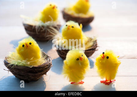 Four Easter Baskets Or Nests With Yellow Feathers And Many Sitting And Standing Easter Chicks In Sunny Light With - Stock Photo