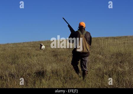 A grouse hunter approaches his English Setter Hunting dog near Pierre South Dakota - Stock Photo