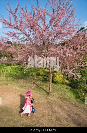 Hmong girls walking under wild Himalayan cherry blossoms (Prunus cerasoides), Khun Chang Khian, Chiang Mai, Thailand - Stock Photo