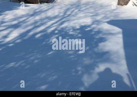 a winter day , shadows of trees on snow,shadow, cold winter day,casting light,snow,winter - Stock Photo