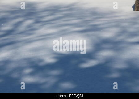 a winter day , shadows of trees on snow,shadow, cold winter day - Stock Photo