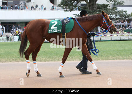 Kyoto, Japan. 1st Feb, 2015. Sudden Storm Horse Racing : Sudden Storm is led through the paddock before the Silk - Stock Photo