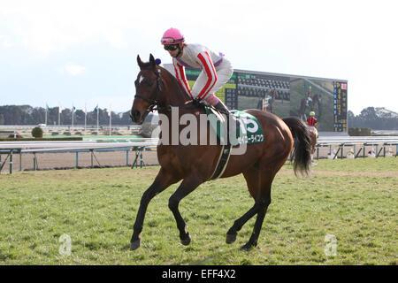 Kyoto, Japan. 1st Feb, 2015. Seiko Raiko (Kota Fujioka) Horse Racing : Seiko Raiko ridden by Kota Fujioka before - Stock Photo