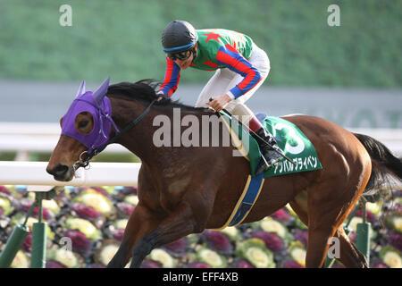 Kyoto, Japan. 1st Feb, 2015. Am Ball Bleiben (Ken Tanaka) Horse Racing : Am Ball Bleiben ridden by Ken Tanaka wins - Stock Photo