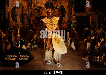 Man in costume of Zulu chief with shield surrounded by dancers in warrior dress during traditional dance show Shakaland, - Stock Photo