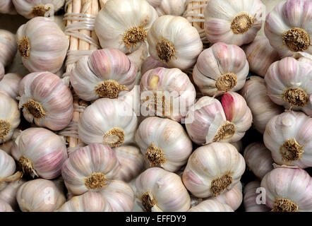 FRESH GARLIC FOR SALE IN A STREET MARKET - Stock Photo