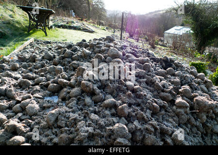 Pile of frozen horse manure in the vegetable garden on a sunny dry morning in rural Carmarthenshire, West Wales - Stock Photo