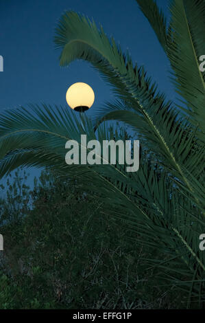 Street lamp post at dusk resembling a full moon with palm branches and dark green copy space, Mallorca, Balearic - Stock Photo
