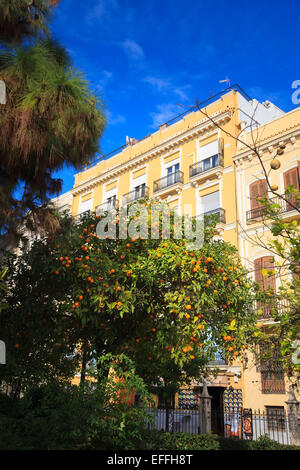 Apartment houses behind a fruiting orange tree in the centre of Valencia - Stock Photo