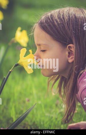 Little girl smelling at daffodil, Narcissus pseudonarcissus - Stock Photo